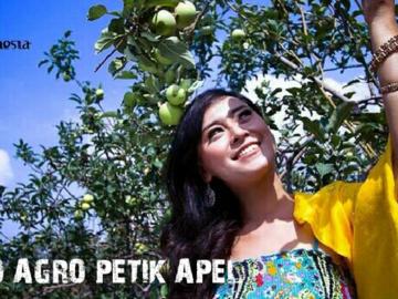 Selling: Bromo agro petik apel